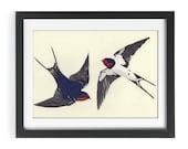 Framed Swallow lino print - Original limited edition, 6 colour wildlife art print.