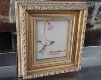 Vintage Freehand With Embroidery Silks Soldanella Alpina Flowers Botanical