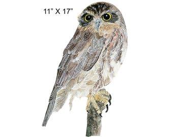 Wall Art - Watercolor Owl - Free Standard Shipping