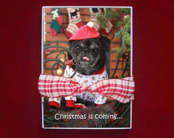 NEW BOXED HOLIDAY Cards - Christmas is Coming - pug christmas cards - 5x7
