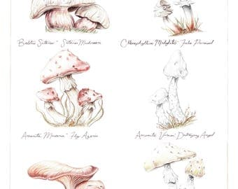 Poisonous Mushrooms AP print