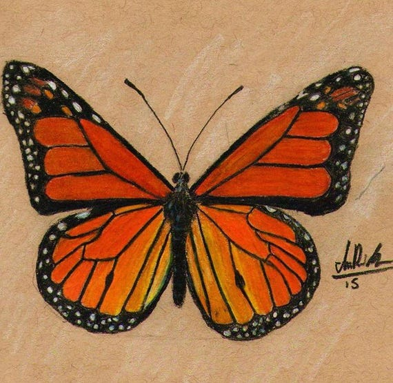 Monarch Butterfly Colored Pencil Drawing Print