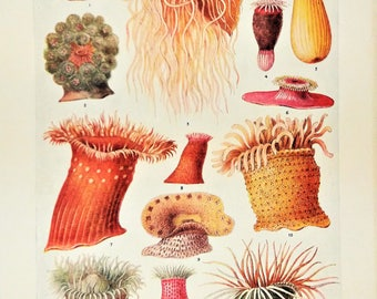 sea anemone vintage print maritime illustration sea life colourful under water world nautical theme decor beach hut marine life ocean