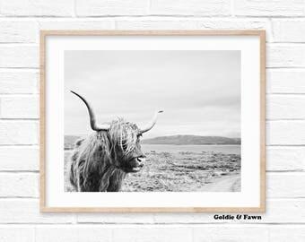 Black and White Cow Print, Digital Print Download, Photography Print, Nursery Print, Scandinavian digital print