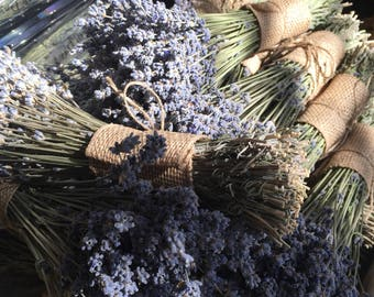 1 beautiful bunch of Munstead lavender,a beautiful light  grey purple color, would look fantastic with gray decor or bridesmaids dresses