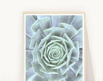 Succulent Poster, Succulent Prints, Scandinavian Modern, Botanical Art Print, Printable Art,Instant Download, Home Decor, Wall Decor