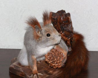Siberian Grey Squirrel - Taxidermy Mount, Stuffed Animal For Sale - Gray Squirrel - ST3999