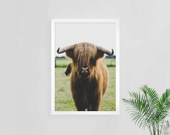 cow art print, highlands cow, cow photograph, cow wall art, cow download, instant art, cow photo, digital download, farm animal, country art