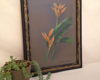 Bird of Paradise Colored Pencil Drawing