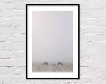 Foggy Pasture, Cow Print, Farm Print, Animal Prints, Fog, Ranch Photo, Winter Photography, Landscape, Rustic Decor, Farm Art, Cows, Wall Art