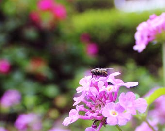 Fly Perched on A Flower Photography Print