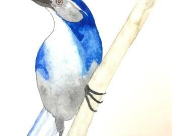 Original Watercolor Painting, miniature painting, Scrub Jay painting, bird art, Scrub Jay art, bird wall art