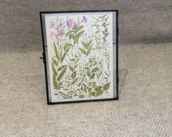 Genuine vintage framed botanical drawing, flower illustrations, botanical print, floral, in glass frame, Green leaves Purple