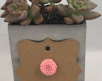 Chrysanthemum Pin Light Pink