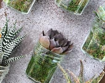 Le Petit Pot à Confiture Aimanté : magnet mini plante grasse, cadeau aux invités nature, cadeaux mariage, baptême, anniversaire, entreprise