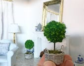 Miniature Topiary in French Basket - Dollhouse Garden - Fairy Garden - Dollhouse - Diorama - 1:12 scale