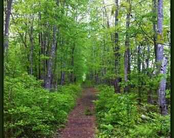 Morning Hike. Photography Digital Download
