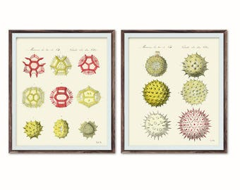 Set of 2, Pollen Print, Digital Download, Botany Wall Art, Pollen Art, Environment Art, Pollen Illustration, Coastal Style Prints, Rustic