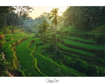 Asia Travel Photography - Green Wall Art, Landscape Print, Nature Photo, Ubud Bali, Indonesia Rice Terrace, Asian Decor, Jungle Sunrise