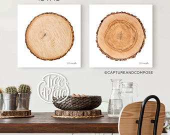 """Ash Tree Ring Canvas Print - 18""""x18"""" Realistic Photograph from a Cut Tree"""