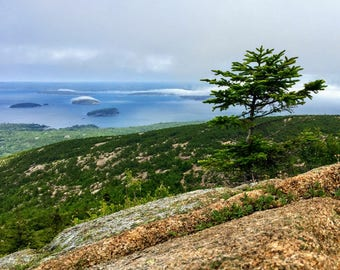 Acadia National Park, Cadillac Mountain, Fog, Ocean, Islands, Tree, Mountain, Nature, Landscape, Gifts, Maine, Color, Day