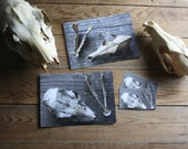 Skulls -  recieve two 5 x 7 photos, one each Deer & Coyote