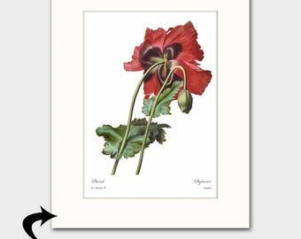 Poppy Art w/Mat (Botanical Wall Art, Red Home Office Decor) Matted Redoute Flower Print