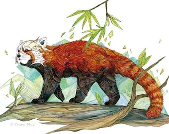 Red Panda A5 Art Print / Red Panda Print / Red cat-bear / Red bear-cat /Animal Illustration / Giclée small Art Print