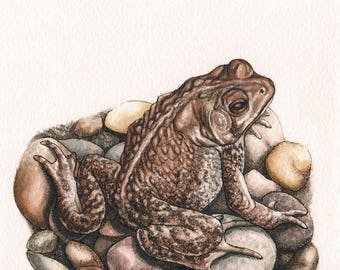 "Toad - Print of Original Art 5"" x 7"" watercolor and ink Giclee archival"