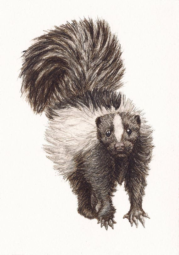 """Skunk - Print of Original Art 5"""" x 7"""" watercolor and ink Giclee archival"""