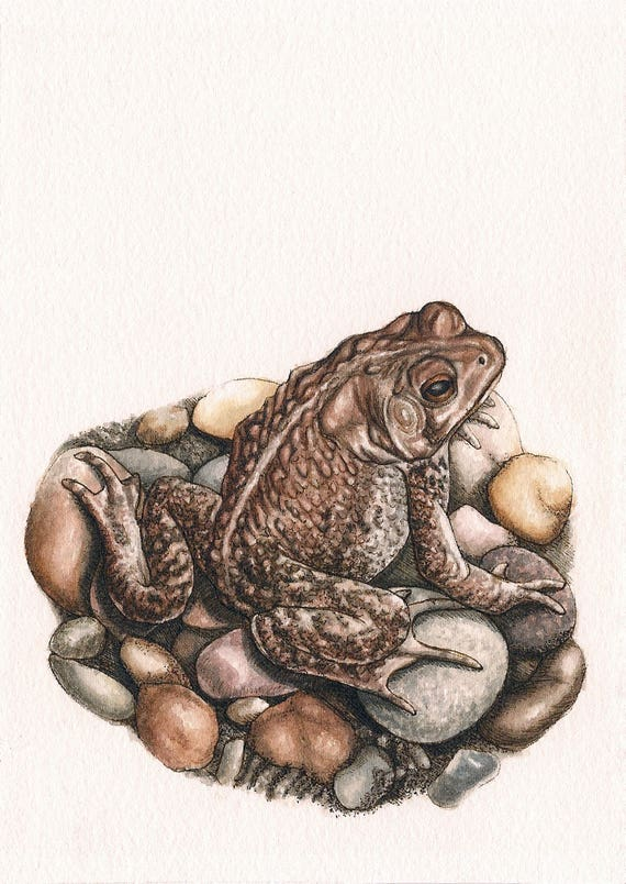 """Toad - Print of Original Art 5"""" x 7"""" watercolor and ink Giclee archival"""