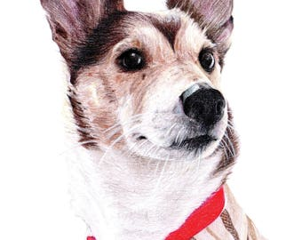 CUSTOM Pet Portrait - Single / Coloured Pencil Pet Portraits / Commissions