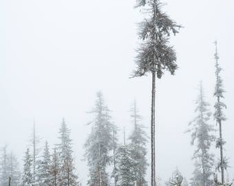Landscape Photography, Tree Photography, Winter Photography, Wall Art, Fine Art, Pacific Northwest, Eastern Oregon, Snow Photography