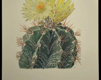 Flowering Cactus Wall Decor Nature Art Print Botanical Print