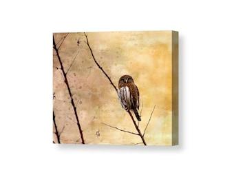 Owl Canvas Art, Pygmy Owl, Small Owls, Nature Canvas Prints, Bird Wall Art, Bird Lover Gift, Raptor, Bird of Prey