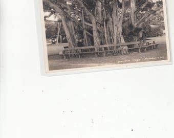 RPPC 1920s Phtographic Postcard Hawaii Banyan Tree Honolulu Benches Encircling The Tree