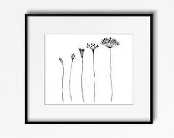 Blooming Black and White Botanical Drawing Art Print