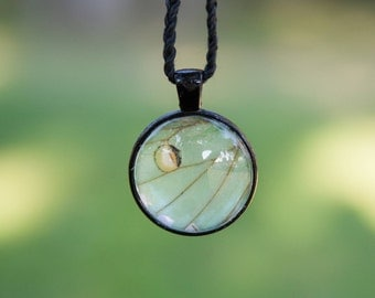 Real Luna Moth Wing Necklace