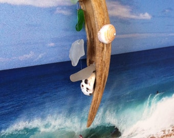 """Sea Shell Hanging: """"The Washout"""""""