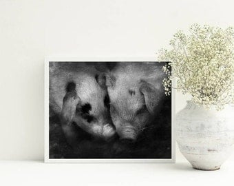 Pig print, Animal Photography, Farming Picture, Farm Art, Country Wall Art, Farmhouse, Pig Lovers, Farmyard Animals, A3, 8x10 Commercial use