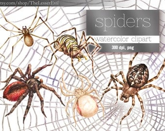 Spider Clipart, Digital Watercolor Spiders Clip Art, Hand-painted Realistic Stock Illustration, Commercial use