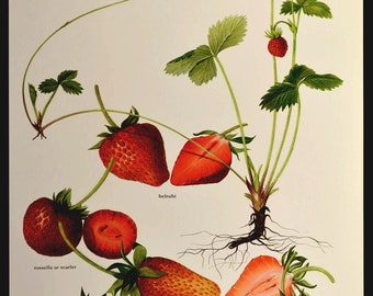 Strawberry Wall Art Fruit Wall Decor Kitchen Strawberries