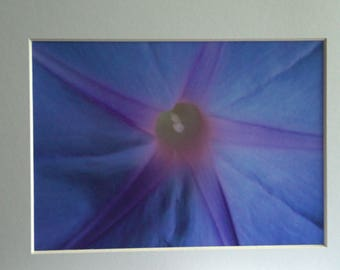 Morning Glory, Mounted Photographic Print 9 x 7 inches. Flower, Convolvulus, Macro, Framed  Art, Home & Office Decor, Purple, Geometric