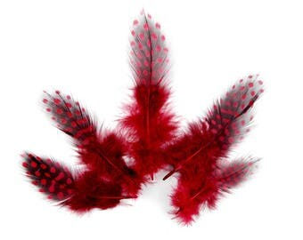 10 x 6 to 14cm red Guinea fowl feather