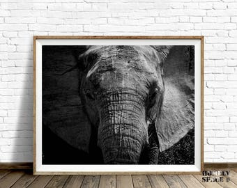 Elephant print Elephant wall art Elephant art Black and white art print Elephant poster Elephant photography Elephant large art Photo prints