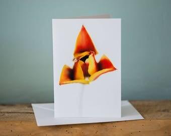 Greetings Card - Tulipa - Floral