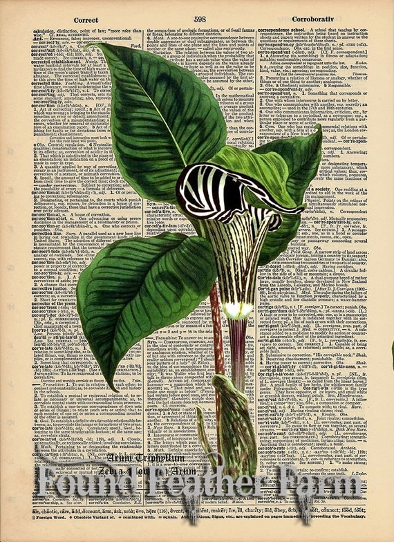 "Vintage Antique Dictionary Page with Antique Print ""Zebra Pitcher Plant with Botanical Name"""