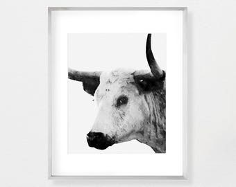 Longhorn Wall Decor Etsy