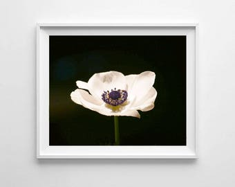 Anemone Wall Art Print, Printable Art, Floral Photography, Anemone Photograph Print, Anemone Print, Flower print, Flower photo print