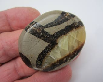 SEPTARIAN Polished Palm Stone Pocket Touch Worry Madagascar 34g